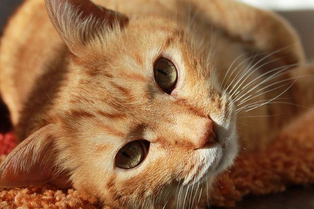 Animal Communication – Part One